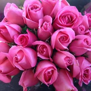pink-737241_960_720